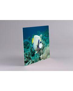 Chromaluxe plaque Alu-Blanc-Mat par 5, coins carrés 240x360mm