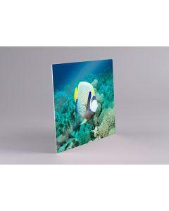 Chromaluxe plaque Alu-Clear-Gloss par 5, coins carrés 240x360mm